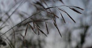 Vegetação natural após a chuva na noite video estoque