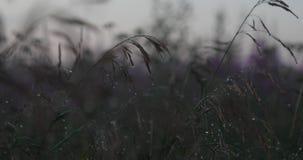 Vegetação natural após a chuva na noite filme