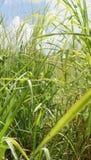 Vegetação natural nos bancos de uma lagoa Fotografia de Stock