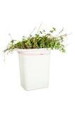 Vegetação no balde do lixo Fotografia de Stock