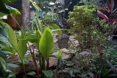Vegetação no jardim zoológico, ajardinando Imagens de Stock