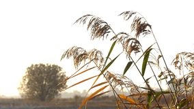 Vegetação nos raios do sol do outono filme