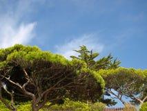 Vegetação o Algarve Imagens de Stock