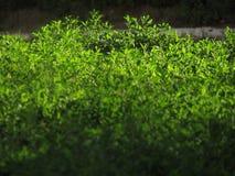 Vegetação perto da estrada, verde Imagens de Stock Royalty Free
