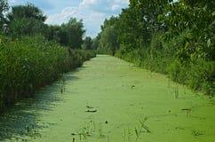 Vegetação que cresce no pântano durante horas de verão fotografia de stock