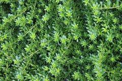 Vegetação rasteira Imagens de Stock