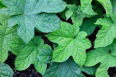 Vegetação rasteira pela planta nativa foto de stock
