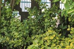 Vegetação rasteira verde com a cerca de pedra Foto de Stock