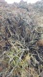 Vegetação seca Fotografia de Stock Royalty Free