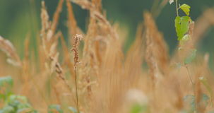 Vegetação seca que balança no vento video estoque