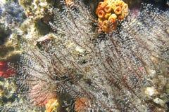 Vegetação subaquática na parede da rocha do retrocesso imagens de stock