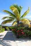 Vegetação tropical Imagem de Stock