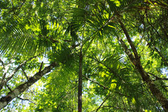 Vegetação tropical fotos de stock royalty free