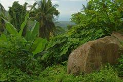 Vegetação tropical imagens de stock royalty free