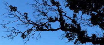 Vegetação tropical contra o céu como uma silhueta Imagens de Stock Royalty Free
