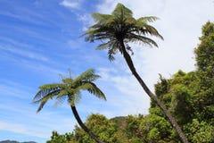 Vegetação tropical luxúria foto de stock royalty free