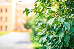Vegetação verde ao longo da estrada no parque fotos de stock royalty free