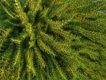 Vegetação verde fim-UPS Luz - cor verde Imagens de Stock