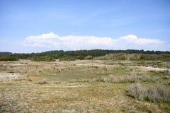 Vegetação verde nas dunas foto de stock royalty free