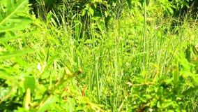 Vegetação verde vibrante HD do mato tropical da selva filme