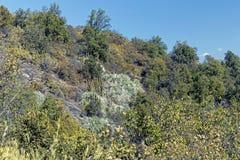 Vegeta??o da montanha com alo?s e cacto, flora do parque de Campana National do La no Chile central, ?m?rica do Sul fotografia de stock