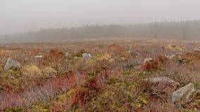 Vegeta??o de Heath e floresta do abeto vermelho na n?voa em montanhas de Ticknock foto de stock royalty free