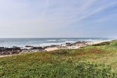 Vegeta??o verde nas dunas na frente do mar imagem de stock royalty free