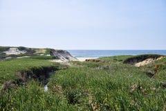 Vegeta??o verde sobre as dunas antes do oceano fotos de stock royalty free