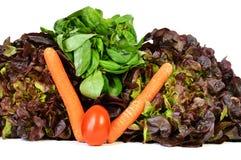 Vegetable ассортименты с салатом Стоковые Фото