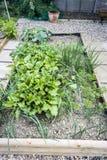 Vegetable заплата стоковые изображения rf