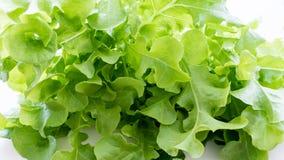 Vegetable зеленый изолированный дуб стоковые фотографии rf