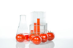 Vegetable испытание, генетическое изменение, томат Стоковые Изображения