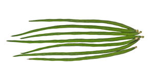 Vegetable кормовое растение Стоковая Фотография