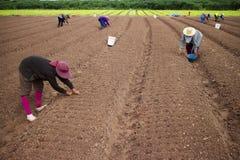 Vegetable обрабатывать землю. стоковая фотография rf