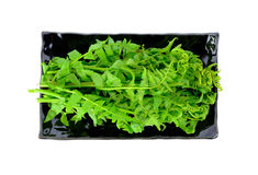 Vegetable папоротник в блюде изолированном на белой предпосылке Стоковое Изображение RF