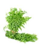 Vegetable папоротник изолированный на белой предпосылке Стоковые Фото