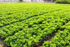 Vegetable поле Стоковые Изображения RF