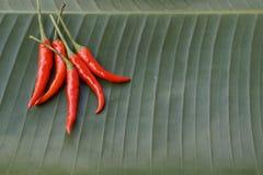 Vegetable предпосылка Chili Стоковая Фотография