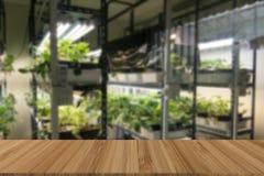 vegetable растущее в системе контроля температуры с искусственным Стоковое Изображение