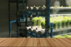 vegetable растущее в системе контроля температуры с искусственным Стоковое Фото