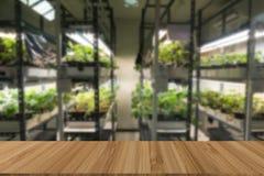 vegetable растущее в системе контроля температуры с искусственным Стоковые Фото