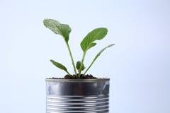 Vegetable растущее Стоковые Изображения