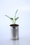 Vegetable растущее Стоковая Фотография RF