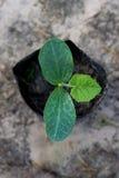 Vegetable саженцы Стоковое фото RF