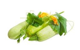Vegetable сердцевины и черенок с листьями, усиками и цветками Стоковые Фотографии RF