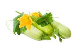 Vegetable сердцевины и черенок с листьями, усиками и цветками Стоковые Изображения
