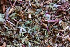 Vegetable сырье для подготовки чая Стоковое фото RF