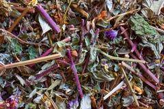 Vegetable сырье для подготовки чая Стоковые Фотографии RF