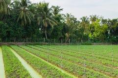 Vegetable ферма в перепаде Меконга Стоковое Фото