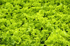 Vegetable 01 Royalty Free Stock Photos